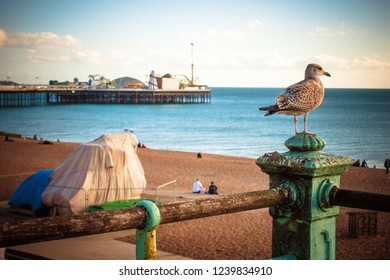 Beach view of Brighton Pier the nature public place with breakwater rock, people, bird and Brighton Pier in the background in the central at Brighton and Hove, England.
