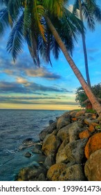 beach view with rocks and coconut trees