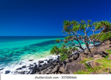 Beach view with rocks and a tree in Burleigh Heads National Park, Gold Coast, Australia
