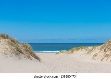 Beach view from the sand dunes (dyke) at Dutch north sea coast with european marram grass (beach grass) under blue clear sky in summer, Netherlands.