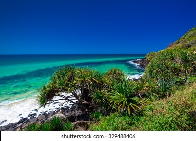 Beach view with a tree in Burleigh Heads National Park, Gold Coast, Australia