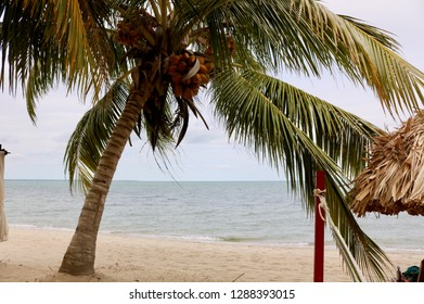 Beach views of sand, water, palm trees, canopy in Hopkins, Belize