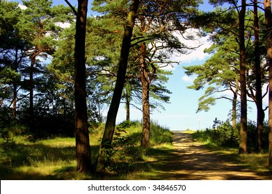Beach way to the Baltic Sea through pine forest