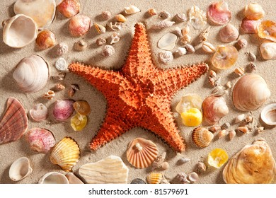 beach with white sand and starfish with shells still life like summer vacation background