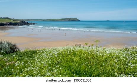 Beach with wild flowers, taken at Polzeath, Cornwall, United Kingdom.
