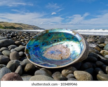 Beached empty Paua, Perlemoen or Abalone shell showing the iridescent nacre mother-of-pearl interior lying ashore on gravel beach