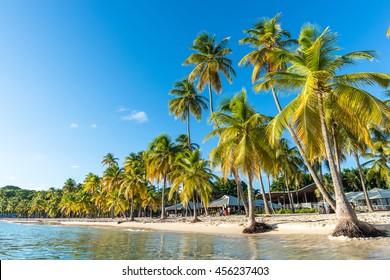 "beachfront of ""Plage de la Caravelle"" in Guadeloupe"