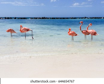 Beachlife for flamingo in Aruba.