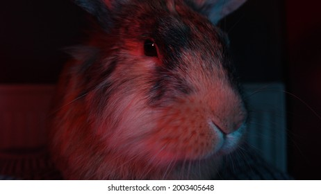 Bead is my pet, a very smart and clever rabbit.