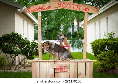 Beagle and Boxer dogs at a kissing booth.