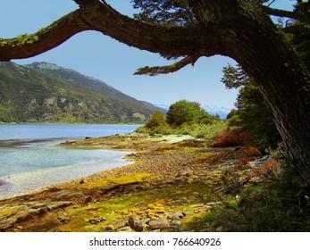 Beagle Channel National Park Argentina.