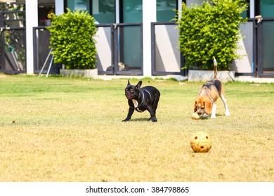 Imágenes, fotos de stock y vectores sobre Dog Park Images