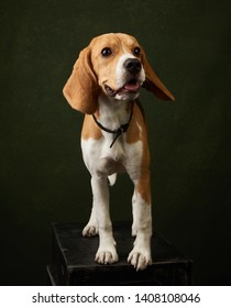 Beagle dog portrait on dark background with copy space, close-up. The beagle is a breed of small hound dog. Pet training. World Animal Day