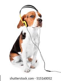Beagle dog wearing headphones isolated on white