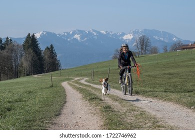 Beagle and her owner are on a mountain bike tour in the Isarwinkel