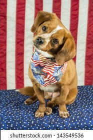 A beagle mix mutt dog tilting its head wears a bandanna decorated with flags and fireworks with American flag in the background, patriotic scene