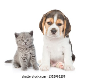 Beagle puppy and gray kitten sitting together. isolated on white background