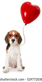Beagle puppy with heart balloon