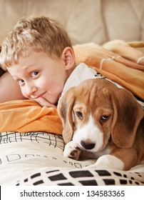 Beagle puppy lying in bed with happy little boy