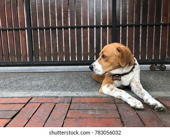 Beagle sitting in front of the door