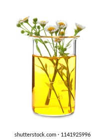 Beaker with flowers on white background