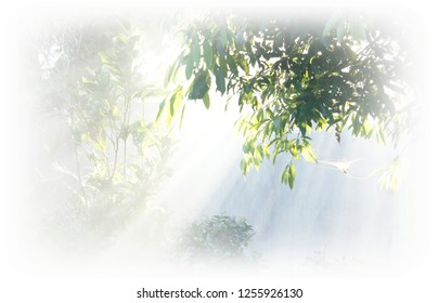 Beam of Dawn in Forest