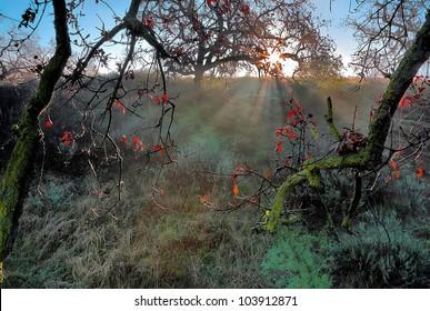 Beams of a morning dawn slip through foliage