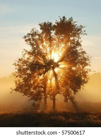 Beams of morning sun filtering through the tree and fog.