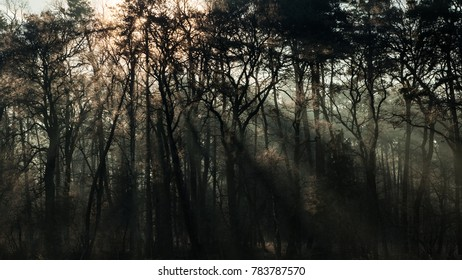 Beams of morning sun through the trees