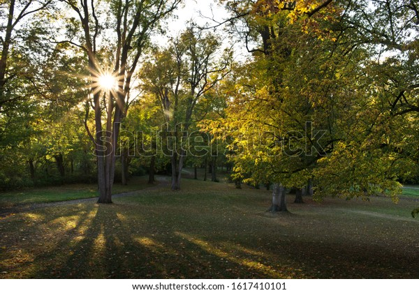 Beams of sun in a forest.