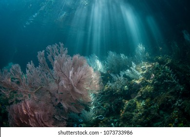 Beams of sunlight illuminate a beautiful coral reef in Raja Ampat. This tropical region is known as the heart of the Coral Triangle due to its marine biodiversity.