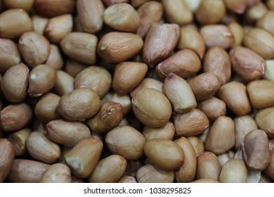 bean seed pattern