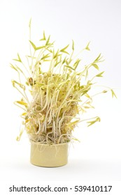 bean sprouts in  canned and white background.
