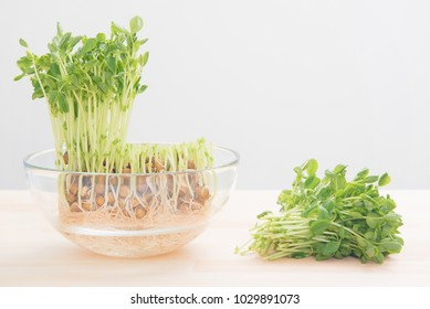 Bean sprouts of the pea