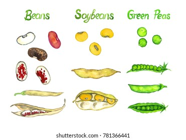 Beans, soybeans, green peas, the pods open and close, isolated hand painted watercolor illustration