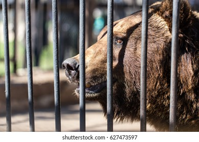 Bear behind the metal fence at the zoo .