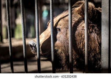 Bear behind the metal fence at the zoo