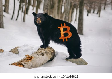 Bear with a Bitcoin logo on fur, illustration bearish trend in crypto currency market