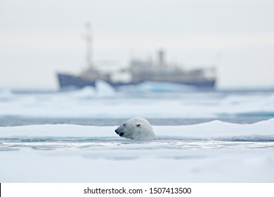 Bear and boat. Polar bear on drifting ice with snow, blurred cruise vessel in background, Manitoba, Canada. Wildlife scene in the nature. Cold winter with vessel. Arctic wild animals in snow and ship.
