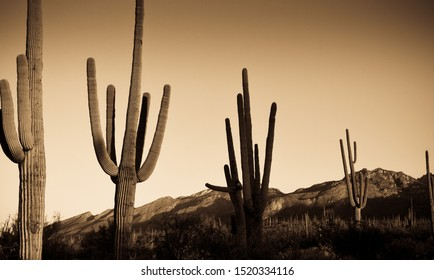 bear canyon mountain and cacti in tucson arizona