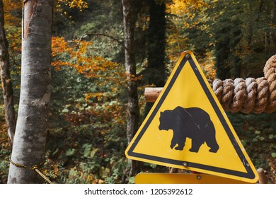 Bear caution yellow sign at autumn forest background. Wild animal danger concept.
