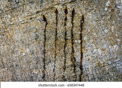 Bear claw marks on tree in Wild