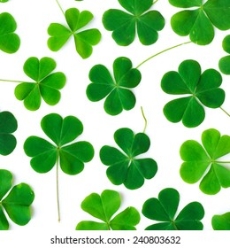 Bear Clover Leaf Green of a St. Patrick's Day Background