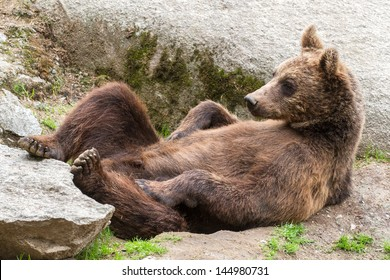 Bear cub relaxing on the back