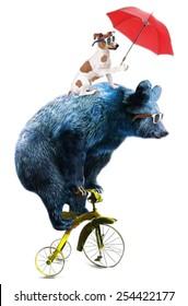 Bear and dog circus show illustration. Performance of the bear on bike.T-shirt graphics.Cute cartoon characters.Animal print.