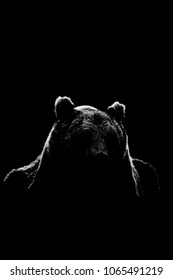 Bear face contour isolated on black background. Bear face silhouette.