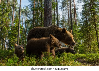 Bear family in deep forest