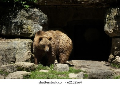 Bear in front of cave
