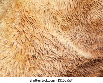 Bear fur texture