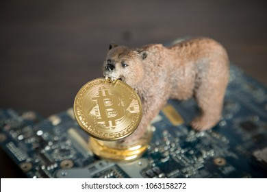 Bear With Gold Bitcoin Cryptocurrency In Mouth On Computer Motherboard. Bear Market Wall Street Financial Concept With Copy Space.